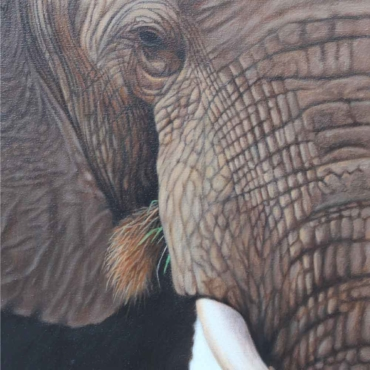 Oil on Canvas For Sale_Big-5-Close-up-ELEPHANT
