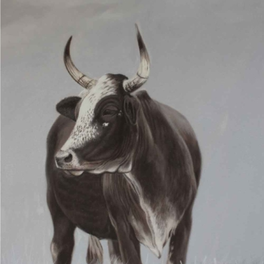 Oil on Canvas For Sale_Nguni-on-Canvas-13