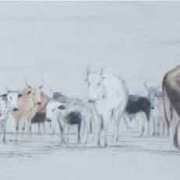 Oil on Canvas For Sale_Nguni-on-Canvas-5
