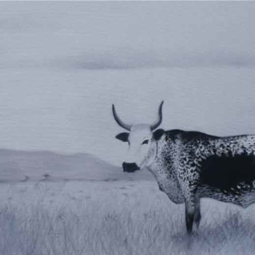 Oil on Canvas For Sale_Nguni-on-Canvas-6
