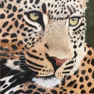 Maritz Artwork_Big-5-Leopard
