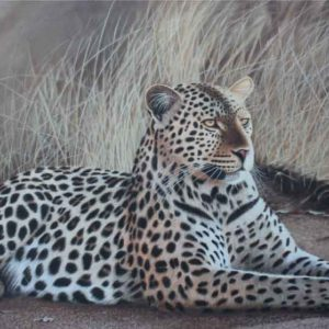 Oil on canvas Sold_Leopard-Beauty