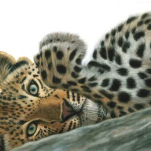 Oil on canvas Sold_Leopard-Up-close-and-personal