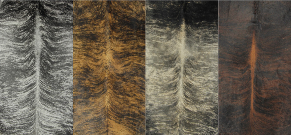Nguni Cowhides_Brindle cover